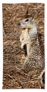 Strike A Squirrelly Pose Beach Towel