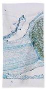 Strobilus On Horsetail Plant Beach Towel