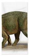 Styracosaurus Albertensis Beach Towel