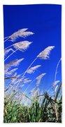 Sugarcane Beach Towel