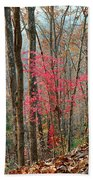 Sumac In Morning Light At Cumberland Falls State Park Beach Towel
