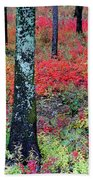 Sumac Slope And Lichen Covered Tree Beach Towel