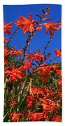 Montbretia, Summer Wildflowers Beach Towel