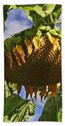 Sunflower At Fall Beach Towel