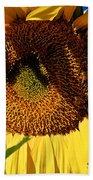 Sunflower Up Close Beach Towel