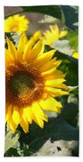 Sunflower Visitor Beach Towel
