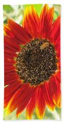 Sunflower With Bee Beach Towel