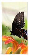 Swallowtail - Lite And Lively Beach Towel