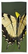 Swallowtail And Friend Beach Towel