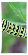 Swallowtail Caterpillar On Parsley Beach Towel