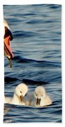 Swan And Signets On Wall Lake  Beach Towel