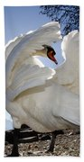 Swan In Backlight Beach Towel
