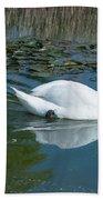 Swan With Cygnets Beach Towel