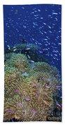 Swarms Of Small Baitfish Swim Beach Towel