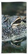 Sweet Baby Alligator Beach Towel