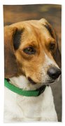 Sweet Little Beagle Dog Beach Towel
