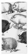 Swine, 1876 Beach Towel