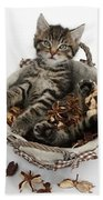 Tabby Kitten In Potpourri Basket Beach Towel