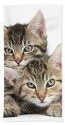 Tabby Kittens Cuddling Beach Towel