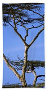 Tall Serengeti Tree And Baboon Beach Towel