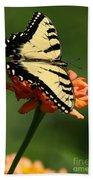 Tantalizing Tiger Swallowtail Butterfly Beach Towel