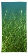 Tapegrass In Freshwater Lake Beach Towel