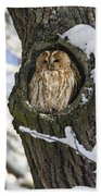 Tawny Owl Strix Aluco In Nest Hole Beach Towel