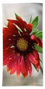 Teary Gaillardia Beach Towel