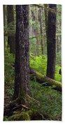 Temperate Rain Forest, Carmanah-walbran Beach Towel
