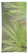Tender Pines Beach Sheet
