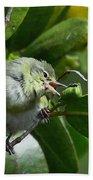 Tennesse Warbler Eating Mangrove Beach Towel