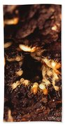 Termite Nest Beach Towel by Science Source