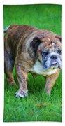 The Bulldog Shuffle Beach Towel