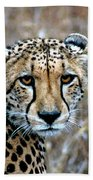 The Cheetah Stare Beach Towel