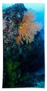 The Coral Encrusted Stern Beach Towel