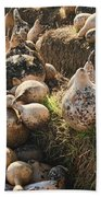 The Gourd Family Beach Towel