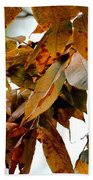The Hickory In Autumn 2 Beach Towel