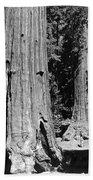 The Mariposa Grove In Yosemite Beach Towel