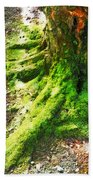 The Moss Covered Roots Beach Towel