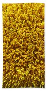 The Nature Of A Sunflower Beach Towel