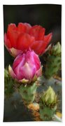 The Prickly Beauty  Beach Towel