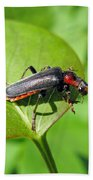 The Rednecked Bug- Close Up 2 Beach Towel