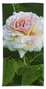 The Splendor Of The Rose Beach Towel