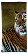The Sumatran Tiger  Beach Towel