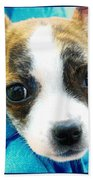 The Three Amigos Teacup Chihuahua Beach Towel