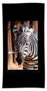 The Three Zebras Black Borders Beach Towel