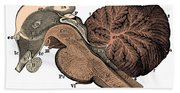 Third And Fourth Ventricles Of The Brain Beach Towel