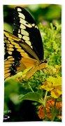 Thoas Swallowtail #1 Beach Towel
