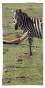 Thomson's Gazelle Running At Full Speed Beach Towel