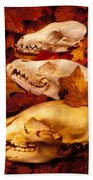 Three Animal Skulls Beach Towel